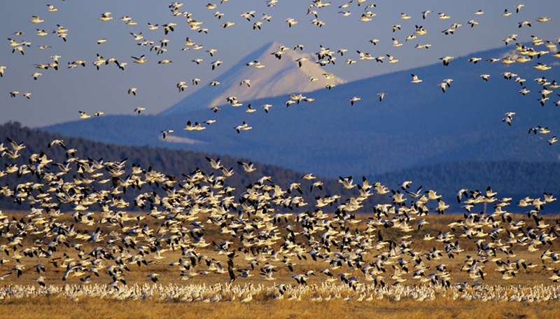 BIRDS SWARMING AROUND WATER PLAINS